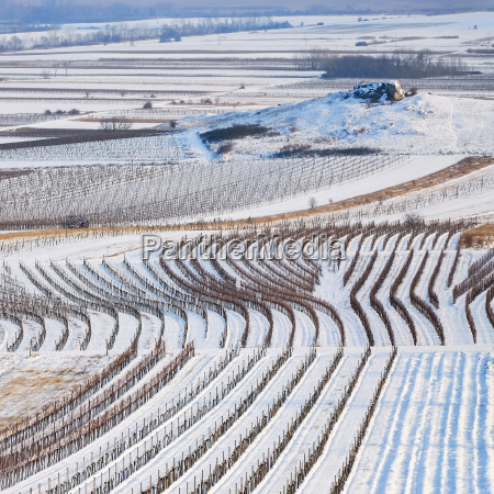 winter landscape with vineyard and rocks