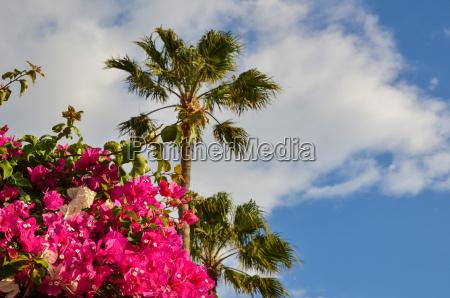 albero fiore pianta fioritura fiorire estate