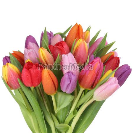 ramo de tulipanes flores en la