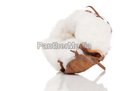 fabrica de algodon