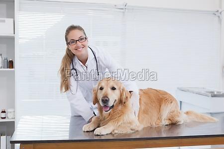 veterinario sonriente que examina un labrador