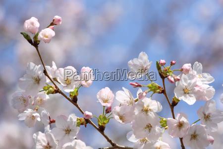 arbol flor planta las maravillosas flores