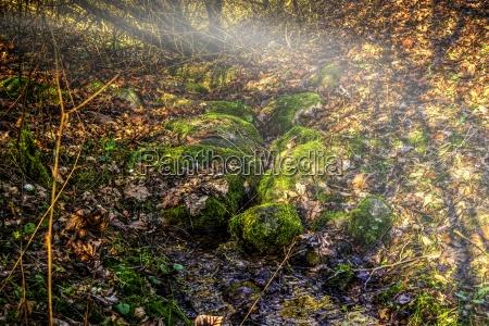 trae traeer skove efterarsstemning landskab natur