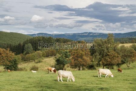los animales pasto la ganaderia produccion