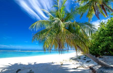 solitaria playa con palmeras