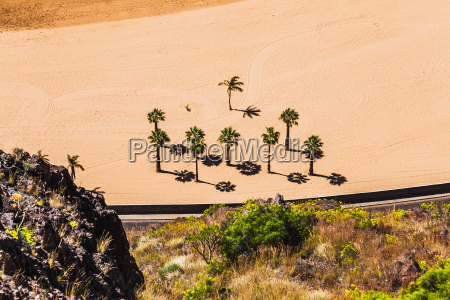 aerial view to palms on the