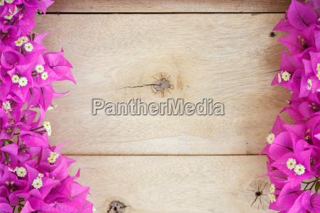 bougainvillea flower space blank on wood