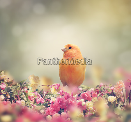 jardin animal pajaro flor planta las