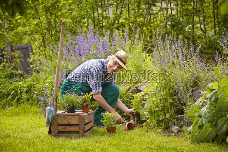 man garden plants