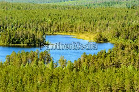 azul medio ambiente arbol superior desierto