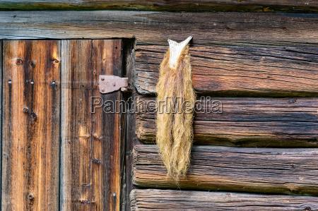 detalle animal madera cabra puerta piel