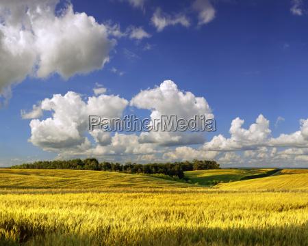 campo agrario en el dia de