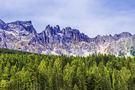 bosque y montanyas