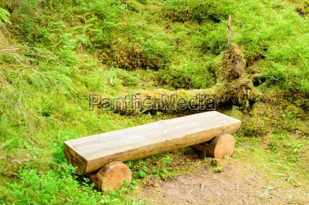 medio ambiente arbol suelo tronco aspero
