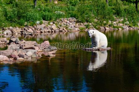 detalle enorme medio ambiente animal mamifero
