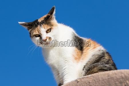 sentarse gato