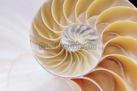 nautilus shell seccion transversal remolino simetria