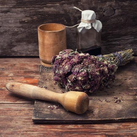 recoleccion de hierbas medicinales