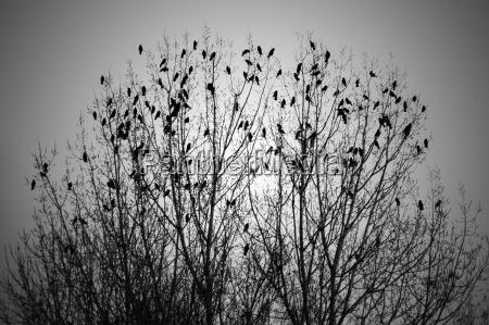 pajaro los animales aves enjambre aves
