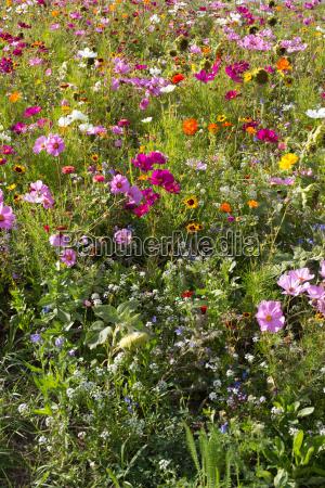 un prado de verano con muchas