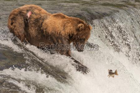 brown refiere la cascada queda mirando