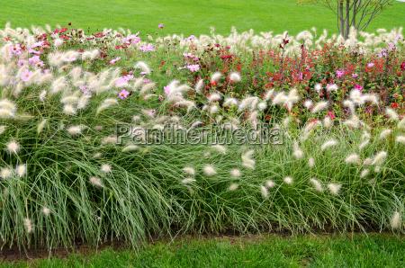 parque fiesta vacaciones flor flores planta
