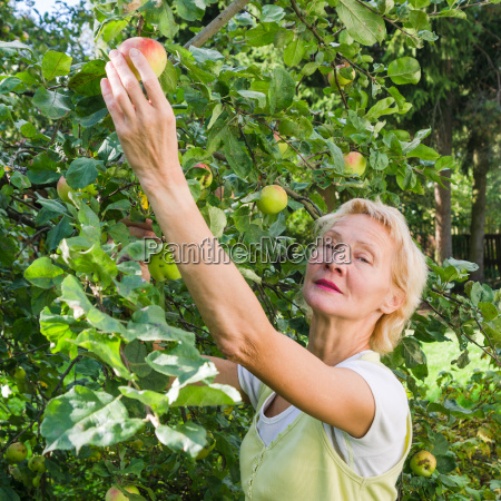 portrait of a woman collecting apples