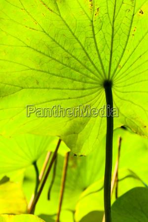 hoja enorme flor planta hojas luz