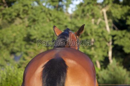 animal verde caballo caballos de nuevo