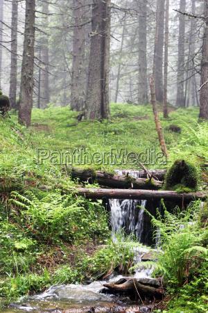 arroyo del bosque