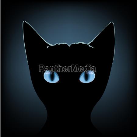 ojos azules gato negro