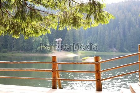 paseo viaje arbol flujo parque piedra