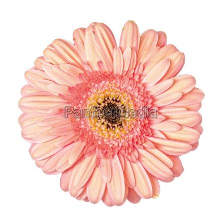 hermoso bueno primer plano liberado flor