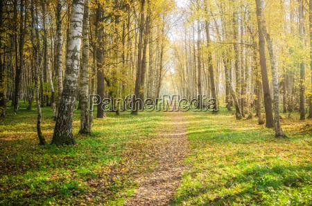 illuminated by sunlight autumn alley