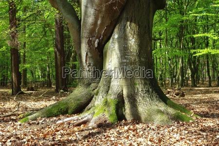 en el bosque darsser isla fischland