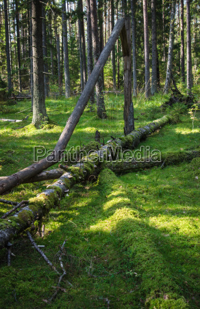 damaged wood pests and fallen trees
