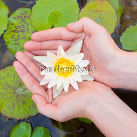manos de mujer sosteniendo flor de
