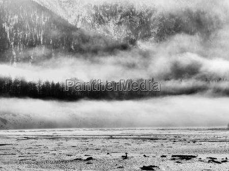 arbol arboles montanyas niebla abetos paisaje