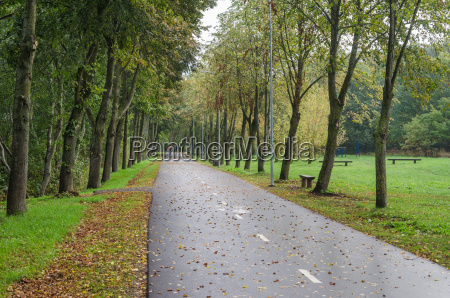 alley with fallen leaves in autumn