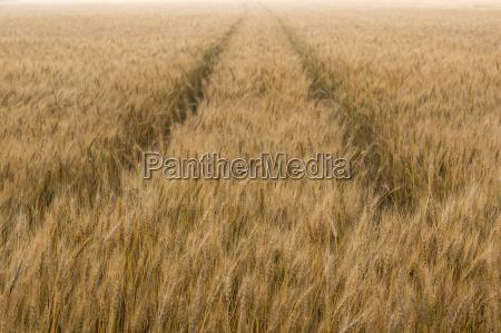 campo de la cebada