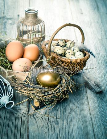 huevos de oro de los pollos