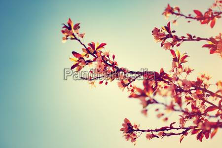frontera del arbol floreciente hermosa