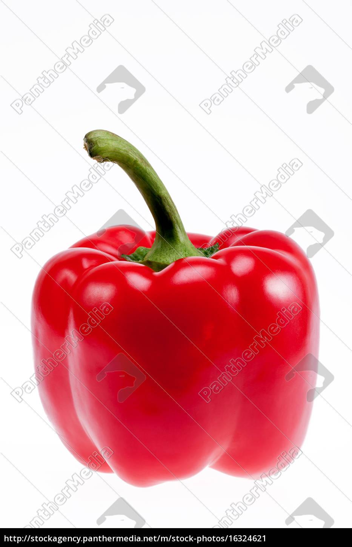 patón, rojo, único, aislado, sobre, fondo - 16324621