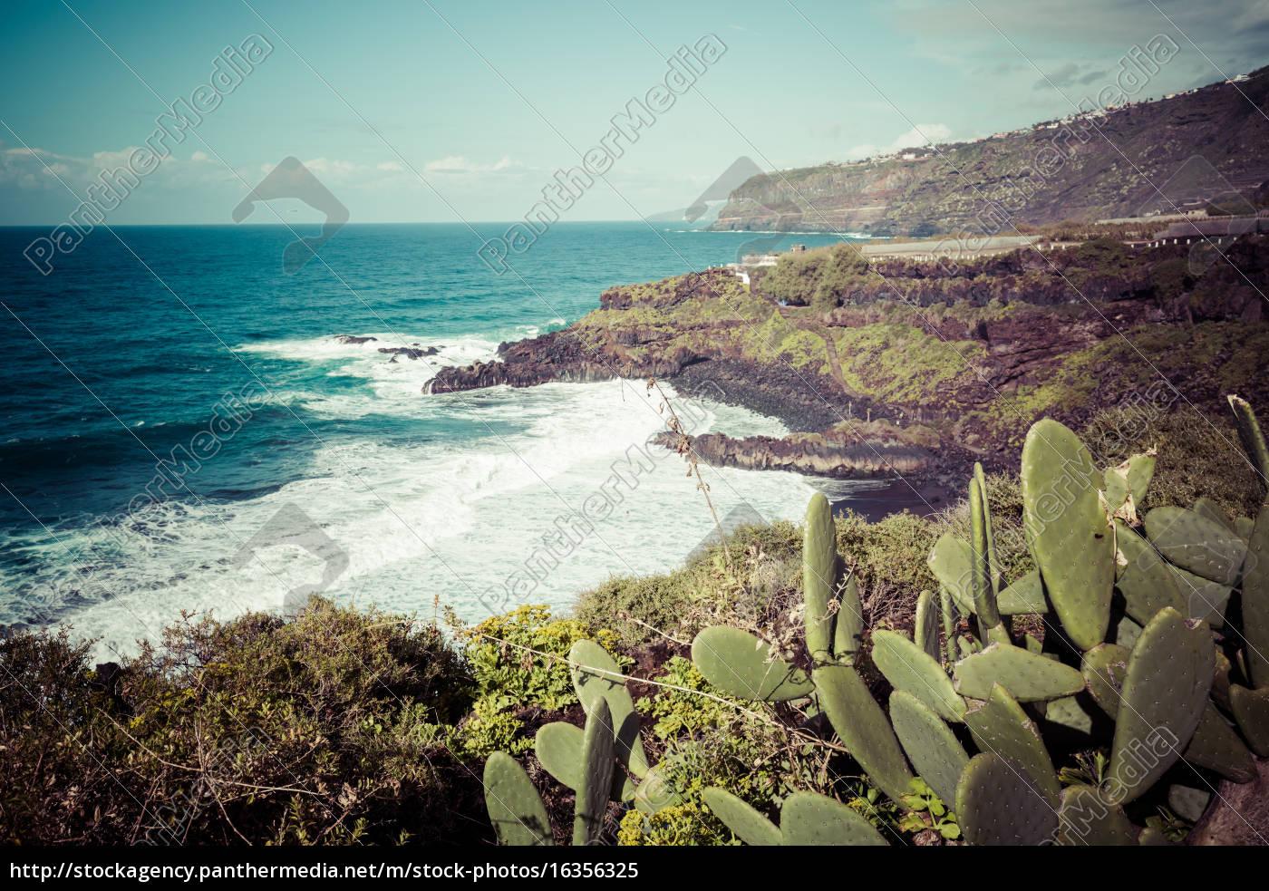 plantación, de, plátanos, en, canarias, tenerife - 16356325