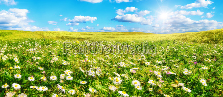 el sol calienta prado ancho lleno