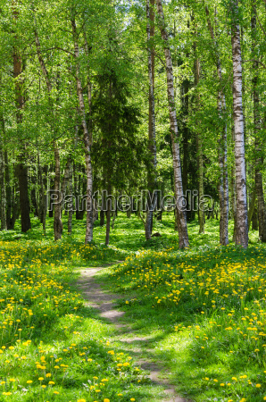 the path leading into spring forest