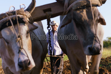 man farmer with plough and ox