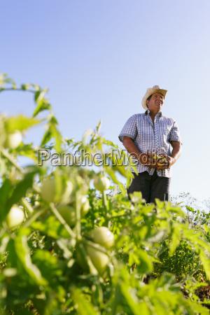 retrato hombre granjero cosechando tomate campo