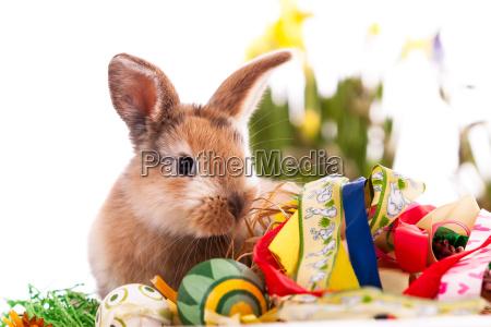 conejo colorido con huevos de pascua