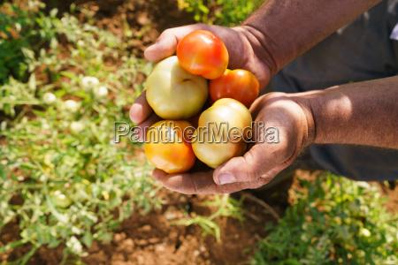agricultura campo cosecha granja agricultor pais
